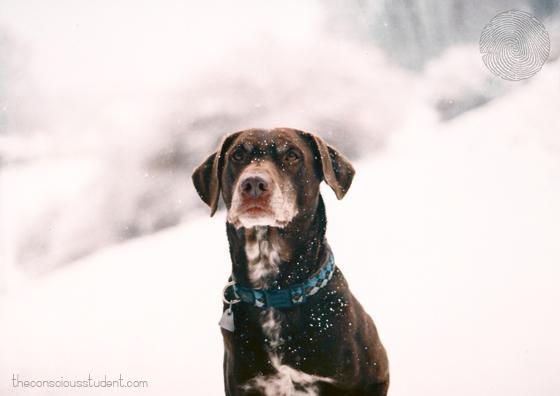 Milo-winter