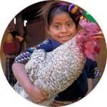 oxfam-chicken